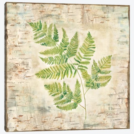 Birch Bark Ferns II Canvas Print #CYN4} by Cynthia Coulter Canvas Art Print
