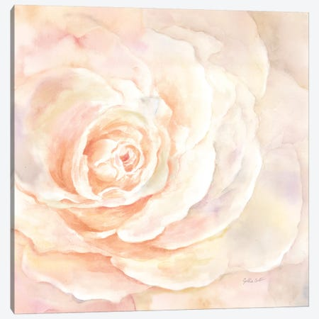 Blush Rose Closeup I Canvas Print #CYN5} by Cynthia Coulter Art Print