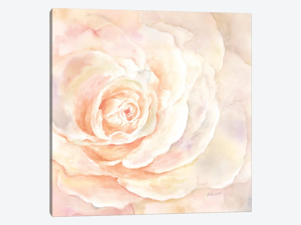 Blush Rose Closeup I by Cynthia Coulter 1-piece Canvas Print