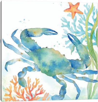 Sea Life Serenade II Canvas Art Print