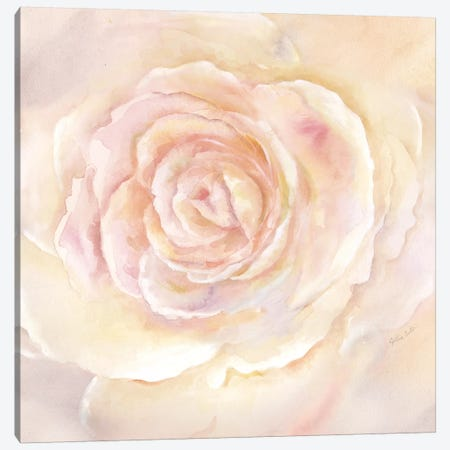 Blush Rose Closeup II Canvas Print #CYN6} by Cynthia Coulter Canvas Art Print