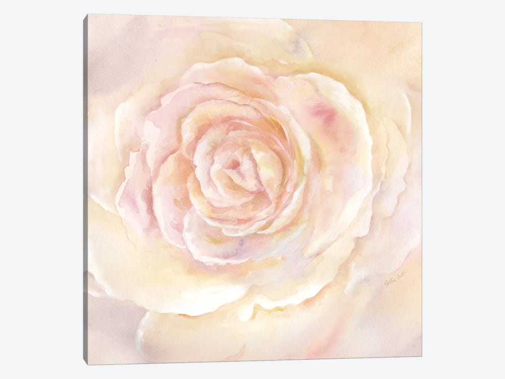 Blush Rose Closeup II by Cynthia Coulter 1-piece Canvas Wall Art