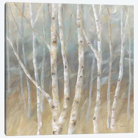 Silver Birch Square Canvas Print #CYN72} by Cynthia Coulter Art Print