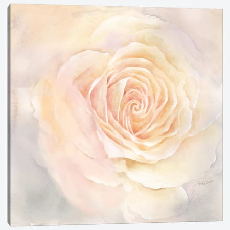Blush Rose Closeup III 3-Piece Canvas #CYN7} by Cynthia Coulter Canvas Art Print