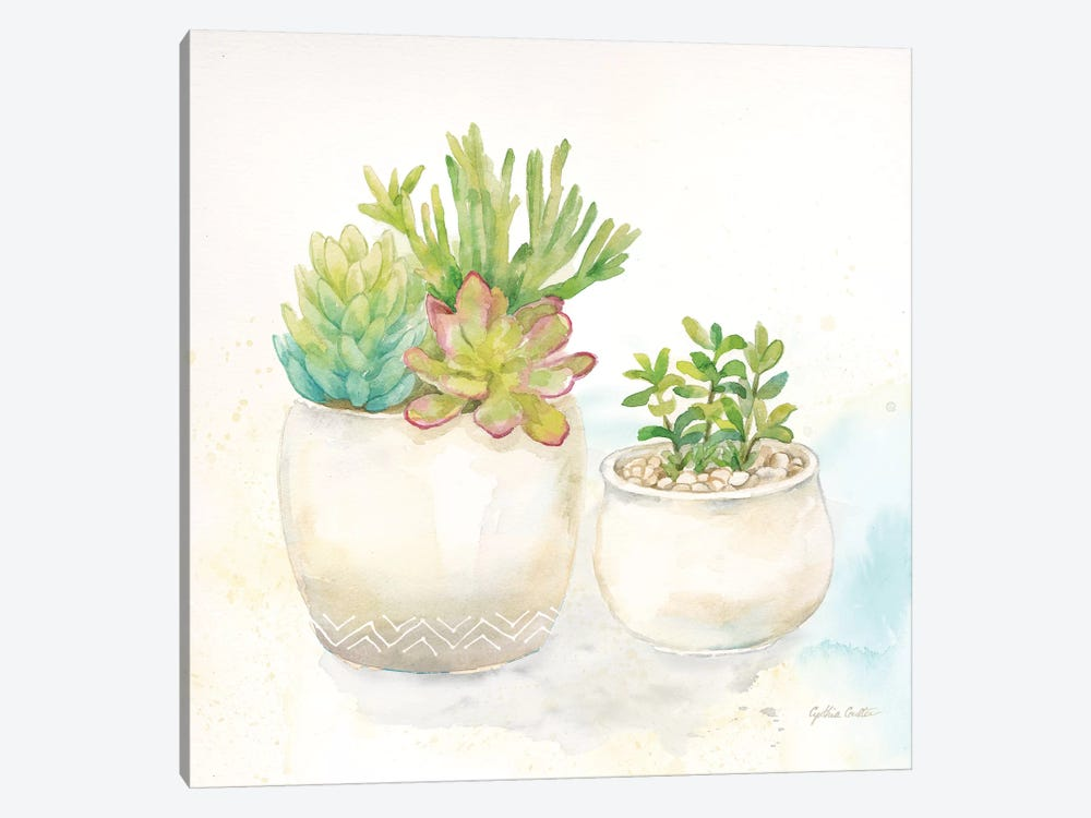 Sweet Succulent Pots I by Cynthia Coulter 1-piece Canvas Art
