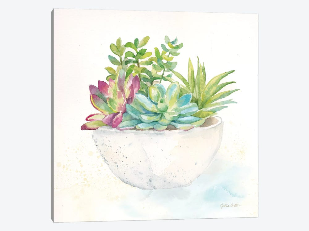 Sweet Succulent Pots II by Cynthia Coulter 1-piece Canvas Art Print