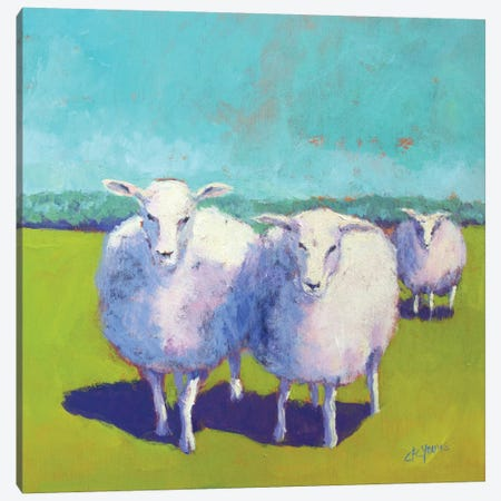 Sheep Pals I Canvas Print #CYO11} by Carol Young Canvas Art