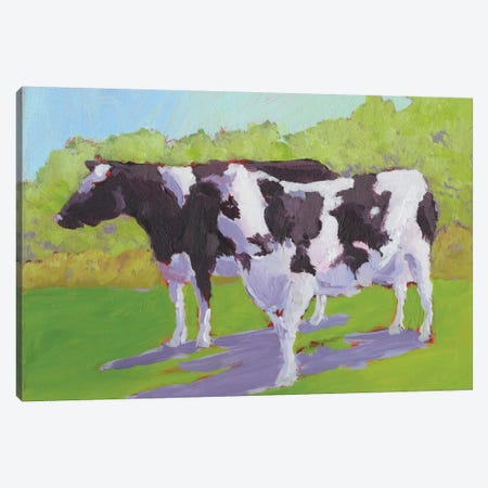 Pasture Cows II Canvas Print #CYO19} by Carol Young Canvas Art