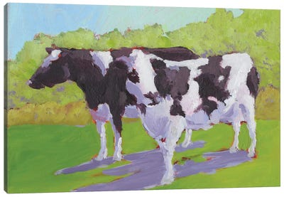 Pasture Cows II Canvas Art Print