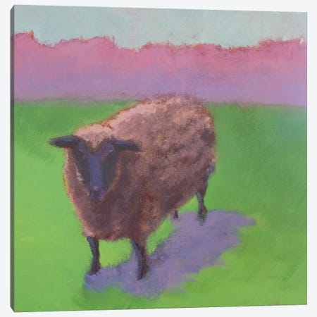 Pasture Sheep Canvas Print #CYO22} by Carol Young Canvas Art Print