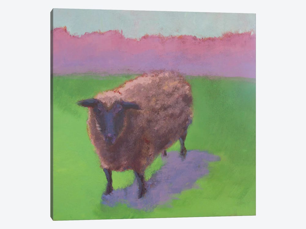 Pasture Sheep by Carol Young 1-piece Canvas Artwork