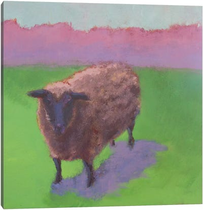 Pasture Sheep Canvas Art Print