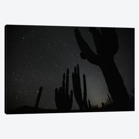 Cardon Cacti By Night With Stars, El Vizcaino Biosphere Reserve, Mexico Canvas Print #CYR11} by Cyril Ruoso Art Print