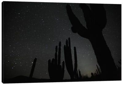 Cardon Cacti By Night With Stars, El Vizcaino Biosphere Reserve, Mexico Canvas Art Print