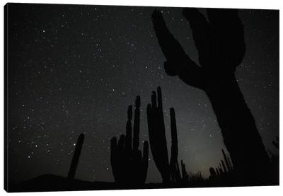 Cardon Cacti By Night With Stars, El Vizcaino Biosphere Reserve, Mexico Canvas Art Print