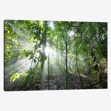 Sun Shining In Tropical Rainforest, Barro Colorado Island, Panama Canvas Print #CYR22} by Cyril Ruoso Canvas Art