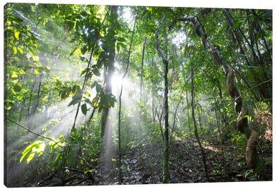 Sun Shining In Tropical Rainforest, Barro Colorado Island, Panama Canvas Art Print