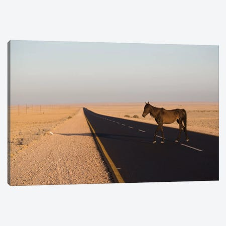 Namib Desert Horse On Road In Desert, Namib-Naukluft National Park, Namibia Canvas Print #CYR29} by Cyril Ruoso Canvas Art