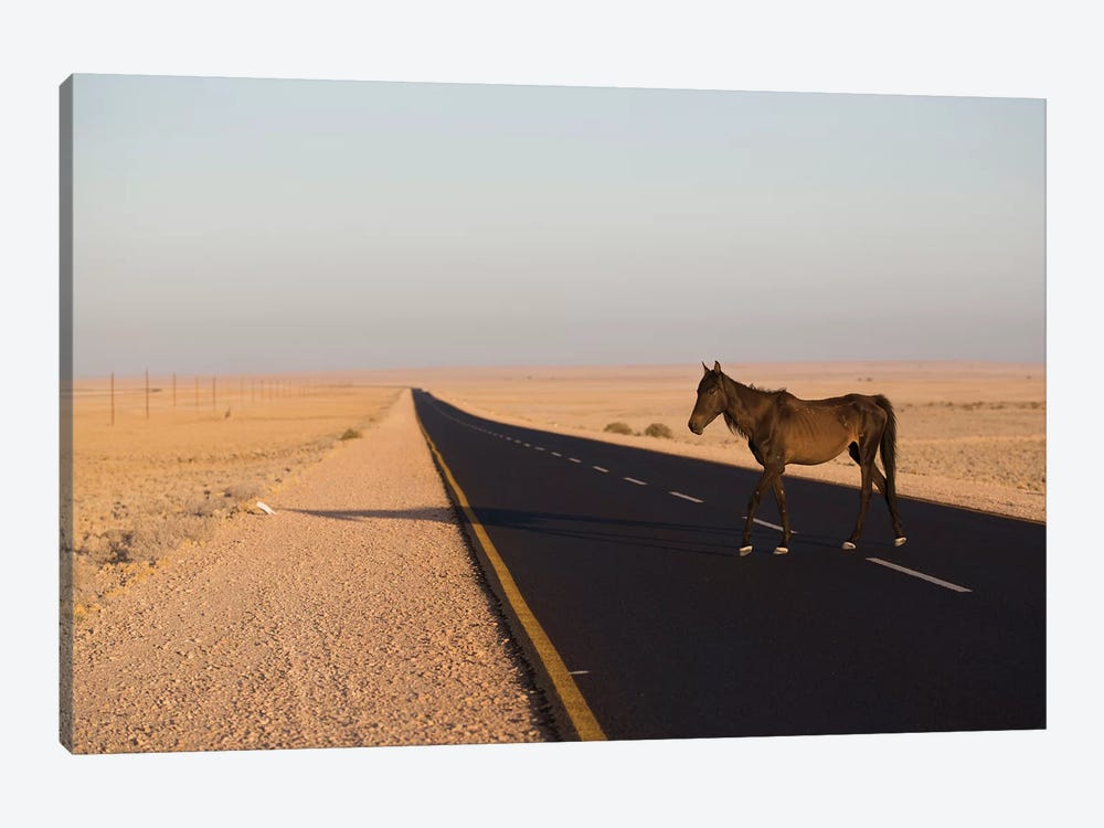 Namib Desert Horse On Road In Desert, Namib-Naukluft National Park, Namibia 1-piece Canvas Print