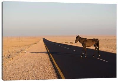 Namib Desert Horse On Road In Desert, Namib-Naukluft National Park, Namibia Canvas Art Print
