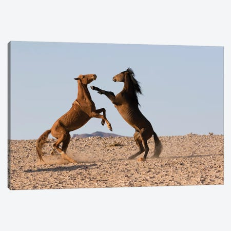 Namib Desert Horse Stallions Fighting In Desert, Namib-Naukluft National Park, Namibia Canvas Print #CYR31} by Cyril Ruoso Art Print