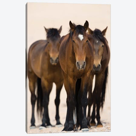 Namib Desert Horse Trio, Namib-Naukluft National Park, Namibia Canvas Print #CYR32} by Cyril Ruoso Canvas Print