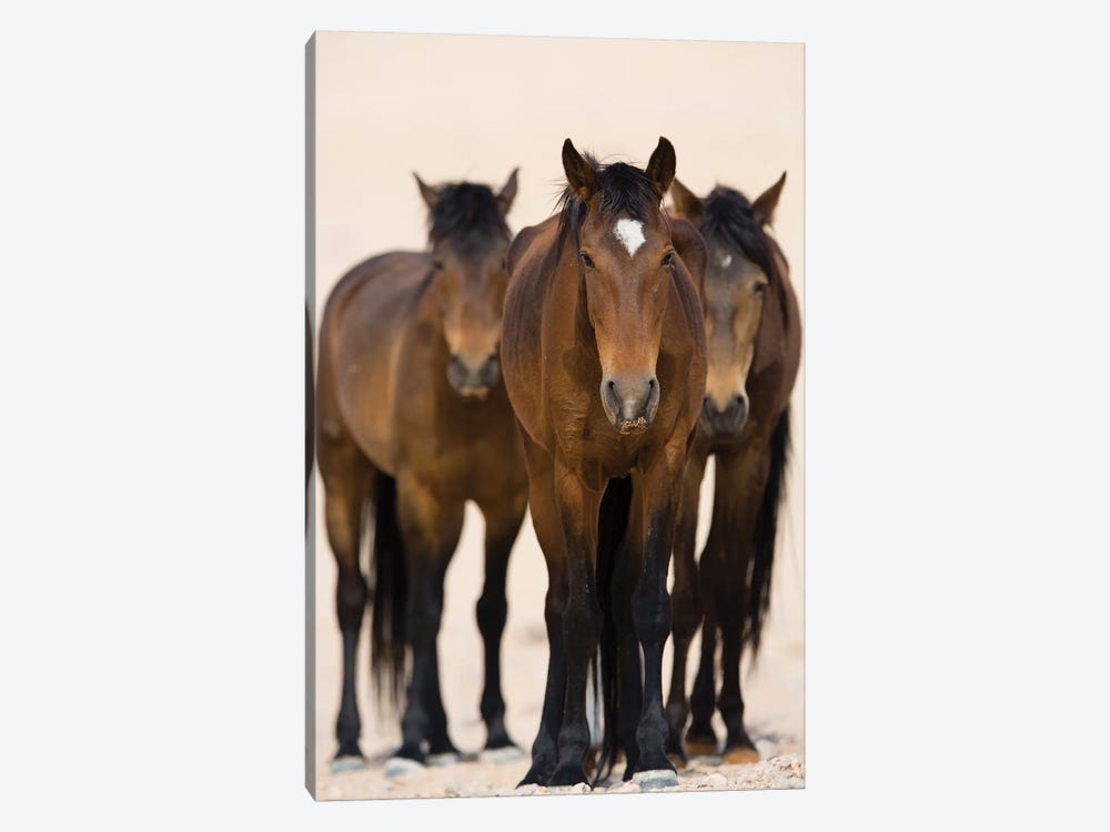 Namib Desert Horse Trio, Namib-Naukluft National Park, Namibia by Cyril Ruoso 1-piece Canvas Print