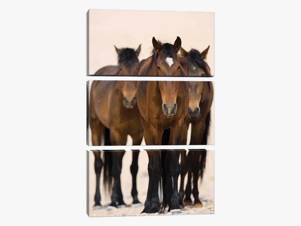 Namib Desert Horse Trio, Namib-Naukluft National Park, Namibia by Cyril Ruoso 3-piece Art Print