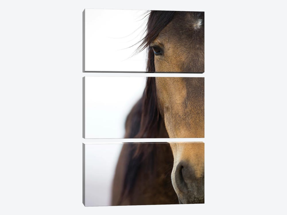 Namib Desert Horse, Namib-Naukluft National Park, Namibia 3-piece Canvas Art