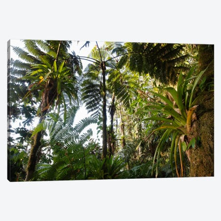 Bromeliad And Tree Fern At 1600 Meters Altitude In Tropical Rainforest, Sierra Nevada De Santa Marta National Park, Colombia I Canvas Print #CYR4} by Cyril Ruoso Canvas Art