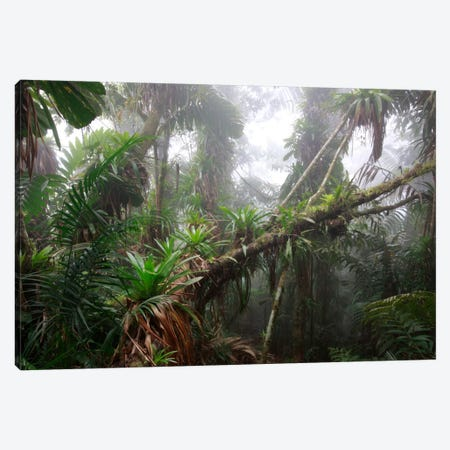 Bromeliad And Tree Fern At 1600 Meters Altitude In Tropical Rainforest, Sierra Nevada De Santa Marta National Park, Colombia II Canvas Print #CYR5} by Cyril Ruoso Canvas Artwork