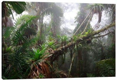 Bromeliad And Tree Fern At 1600 Meters Altitude In Tropical Rainforest, Sierra Nevada De Santa Marta National Park, Colombia II Canvas Art Print