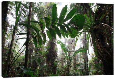Bromeliad And Tree Fern At 1600 Meters Altitude In Tropical Rainforest, Sierra Nevada De Santa Marta National Park, Colombia VI Canvas Art Print