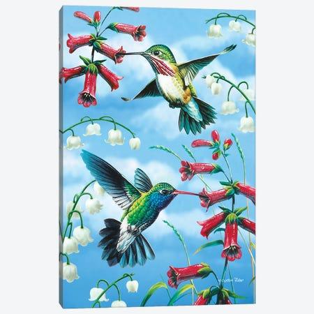 Hummingbird Canvas Print #CYT108} by Cynthie Fisher Art Print