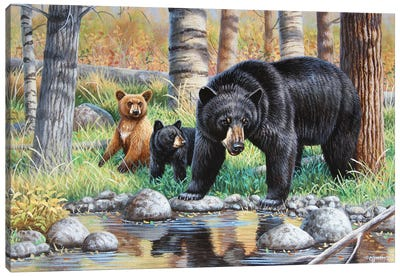 Bear With Cubs III Canvas Art Print