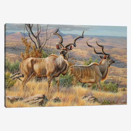 Kudu Bulls Canvas Print #CYT112} by Cynthie Fisher Canvas Artwork