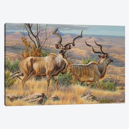 Kudu Bulls Canvas Print #CYT112} by Cynthie Fisher Canvas Artwork