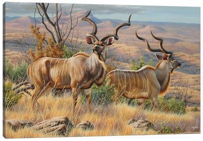 Kudu Bulls Canvas Art Print