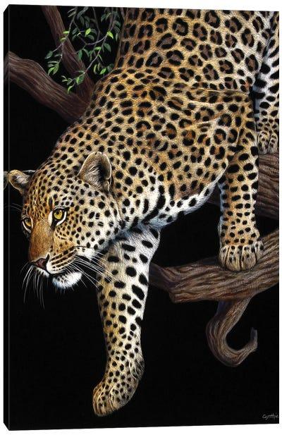 Leopard In Tree Canvas Art Print