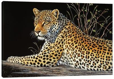 Leopard On Rock Canvas Art Print