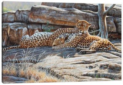 Leopard Pair II Canvas Art Print