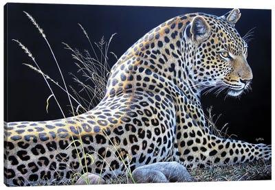 Leopard Sb Canvas Art Print