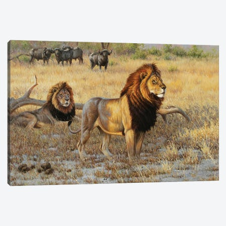 Lions And Bufs Canvas Print #CYT128} by Cynthie Fisher Canvas Art Print