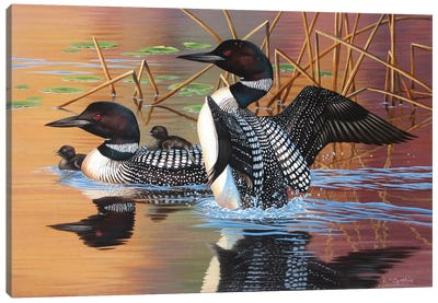 Loon Family Canvas Art Print