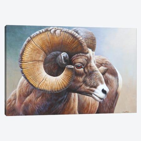 Bighorn Canvas Print #CYT12} by Cynthie Fisher Canvas Print