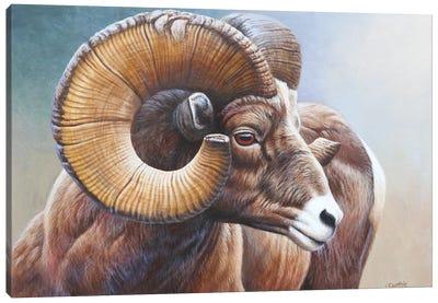 Bighorn Canvas Art Print