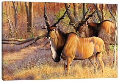 Lord Derbies Canvas Art Print