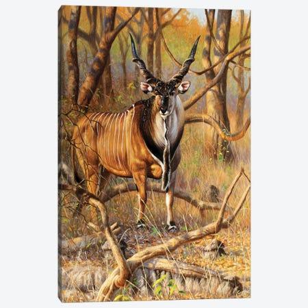 Lord Derby Bull Canvas Print #CYT133} by Cynthie Fisher Canvas Wall Art