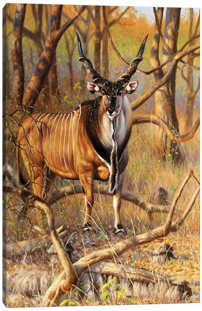 Lord Derby Bull Canvas Art Print