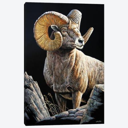 Bighorn Sb Canvas Print #CYT13} by Cynthie Fisher Art Print